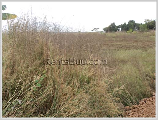 ID: 1566 - Rice paddy land near 450 year road for sale