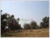 ID: 297 - Large land for sale near Dongkhamxang Collage
