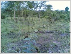 ID: 3688 - Argiculture land for sale in Phonhong District, Vientiane Province