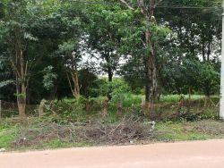ID: 4175 - The large land in quiet area close to Huakua Market for sale