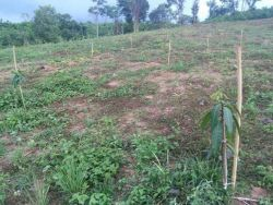 ID: 4501- Large land by main road near Khokhae market for Sale in Sangthong District
